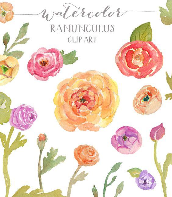 Watercolor Ranunculus Clip Art.
