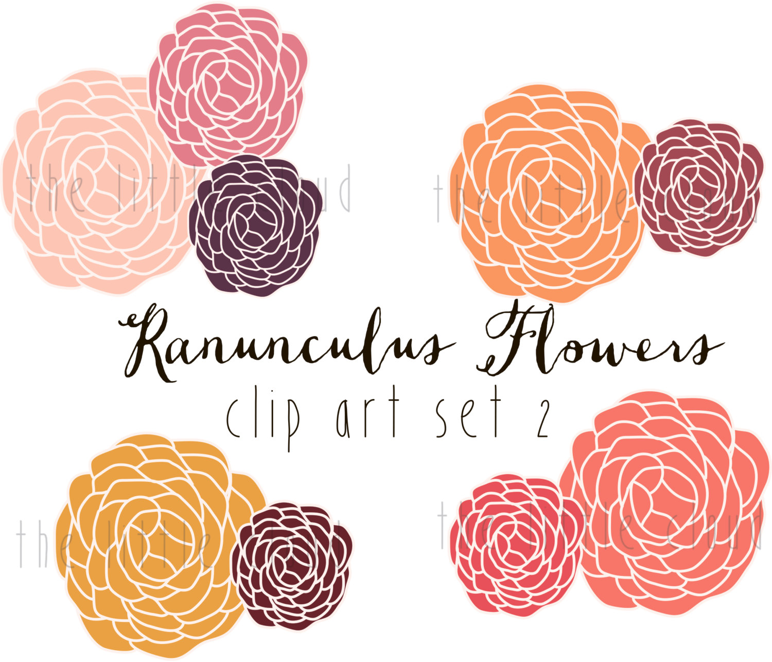 Ranunculus Flower Clip Art vector and png.
