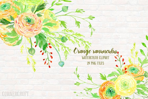 Watercolor Clipart Orange Ranunculus ~ Illustrations on Creative.