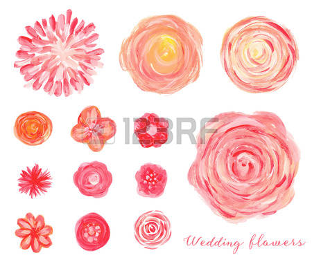 611 Ranunculus Flowers Stock Illustrations, Cliparts And Royalty.