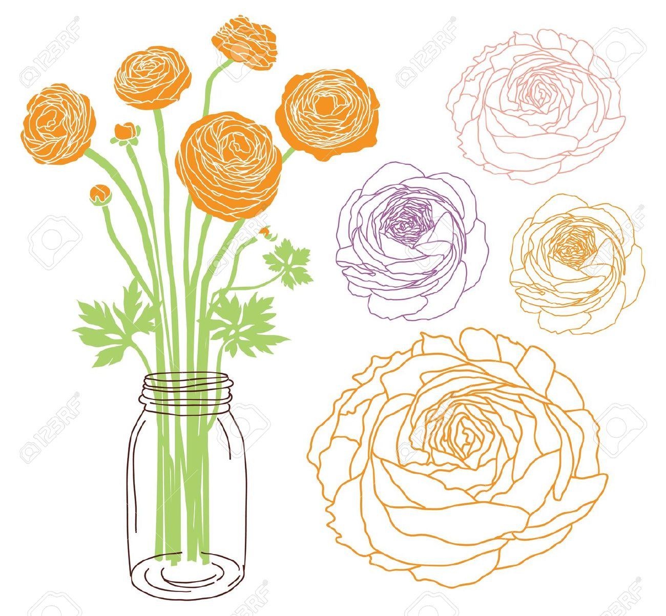 Ranunculus Flower Bouquet In A Jar Royalty Free Cliparts, Vectors.
