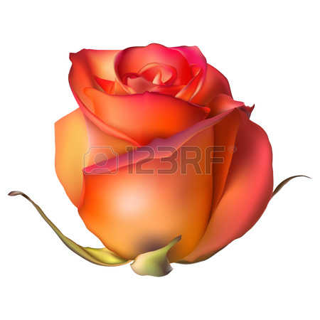 Orange rose clipart.