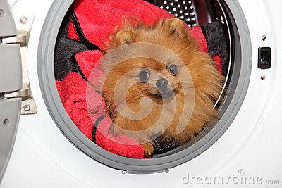 Dog In Washing Machine Stock Photography.