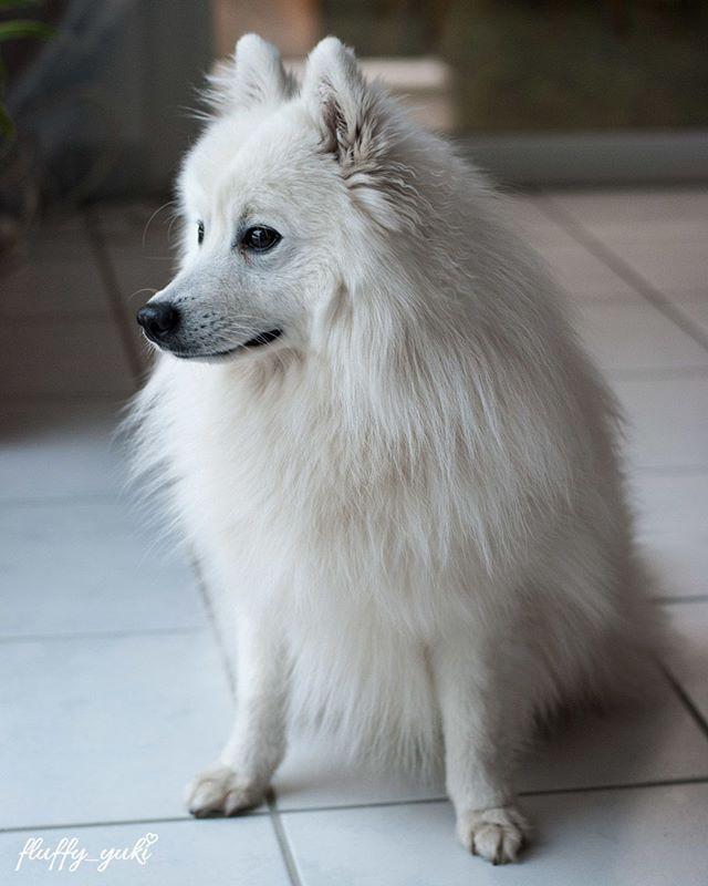 1000+ ideas about Instagram Dog on Pinterest.