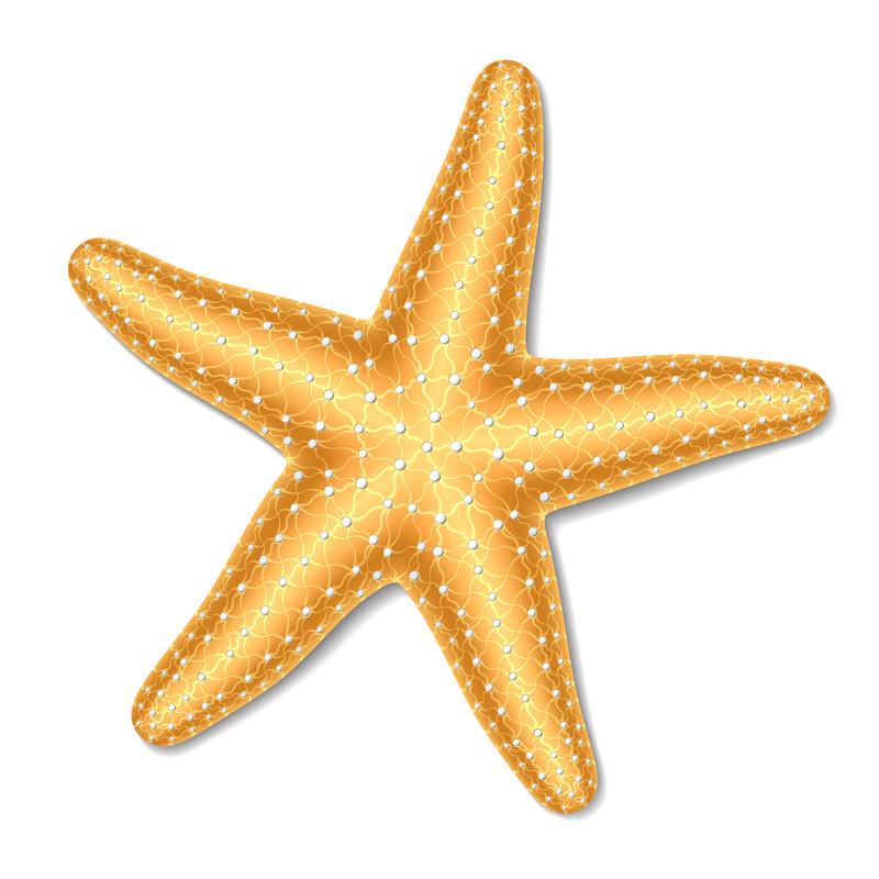 Cute Orange Starfish Clipart.