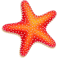 Download Starfish Free PNG photo images and clipart.