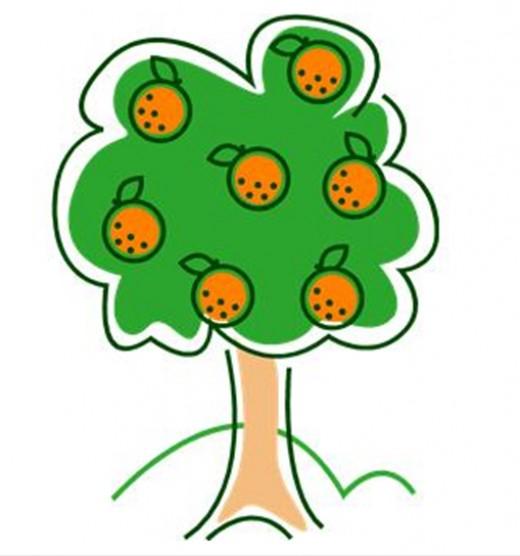 Orange Tree Drawing.