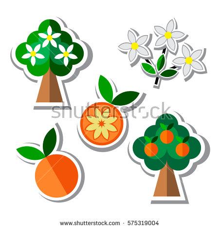 Orange Tree Blossom Stock Vectors, Images & Vector Art.