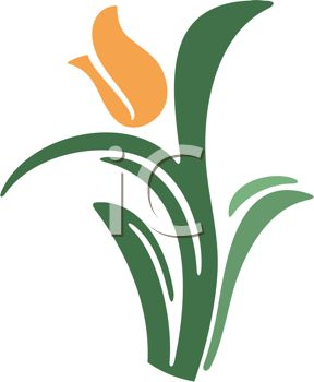Orange Tulip Flower Graphic.