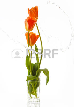6,728 Colorful Tulips Stock Vector Illustration And Royalty Free.