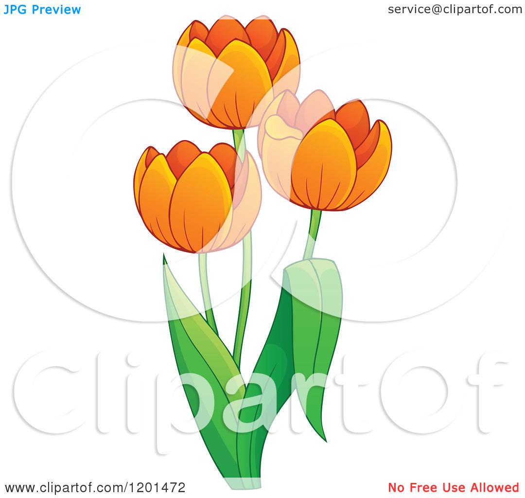 Cartoon of a Tulip Plant with Orange Flowers.