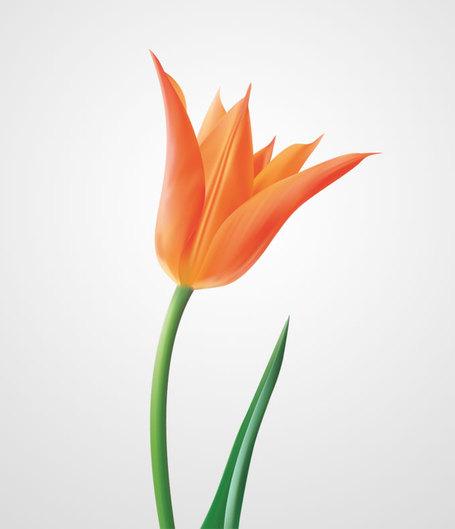 Tulip Clip Art, Vector Tulip.