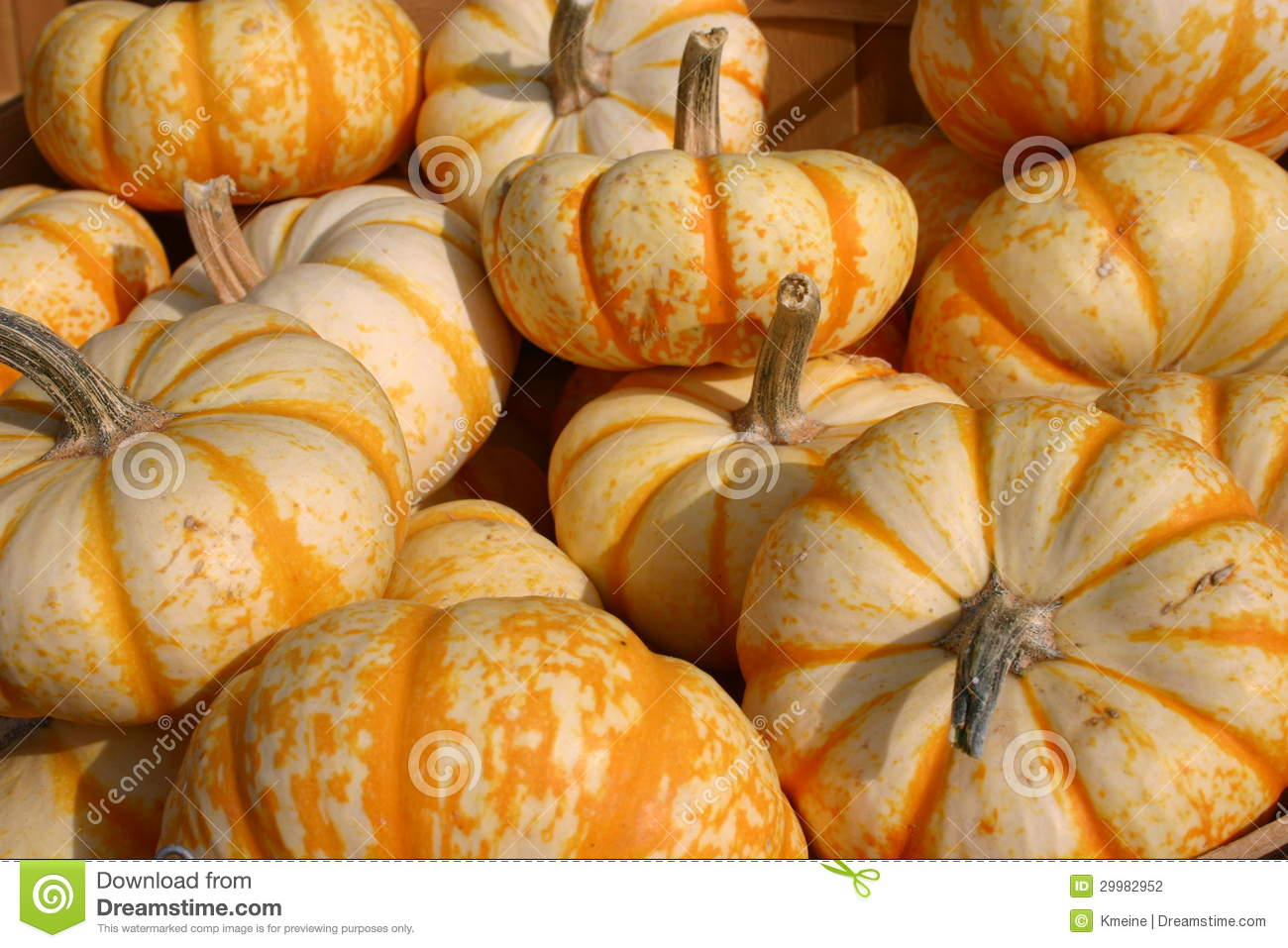 Little Orange And White Pumpkins Stock Photography.