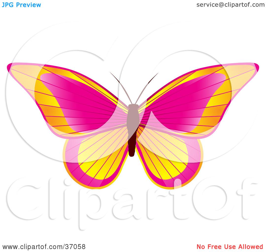 Orange pink clipart.