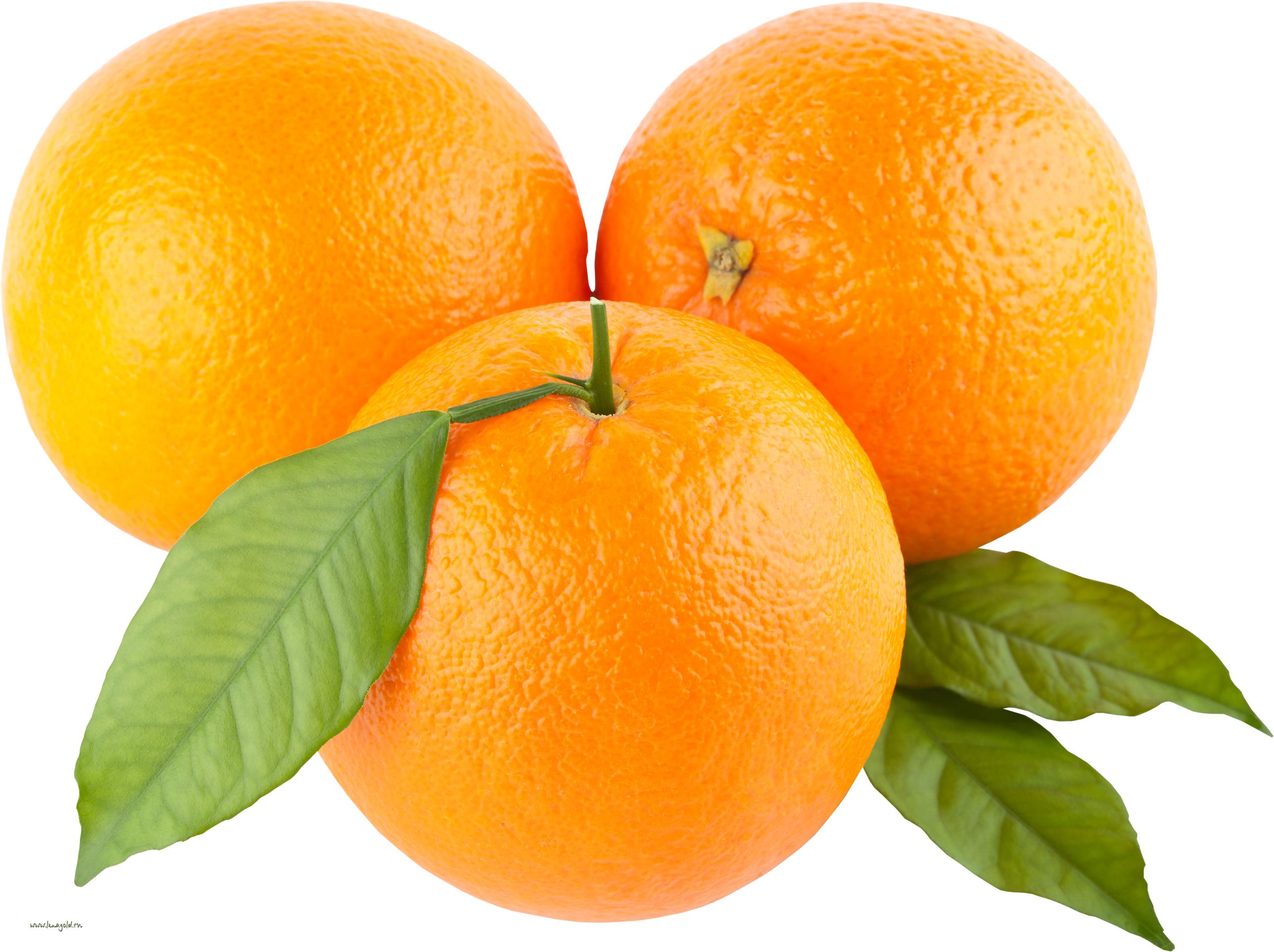 Oranges orange clip art free clipart images 5.