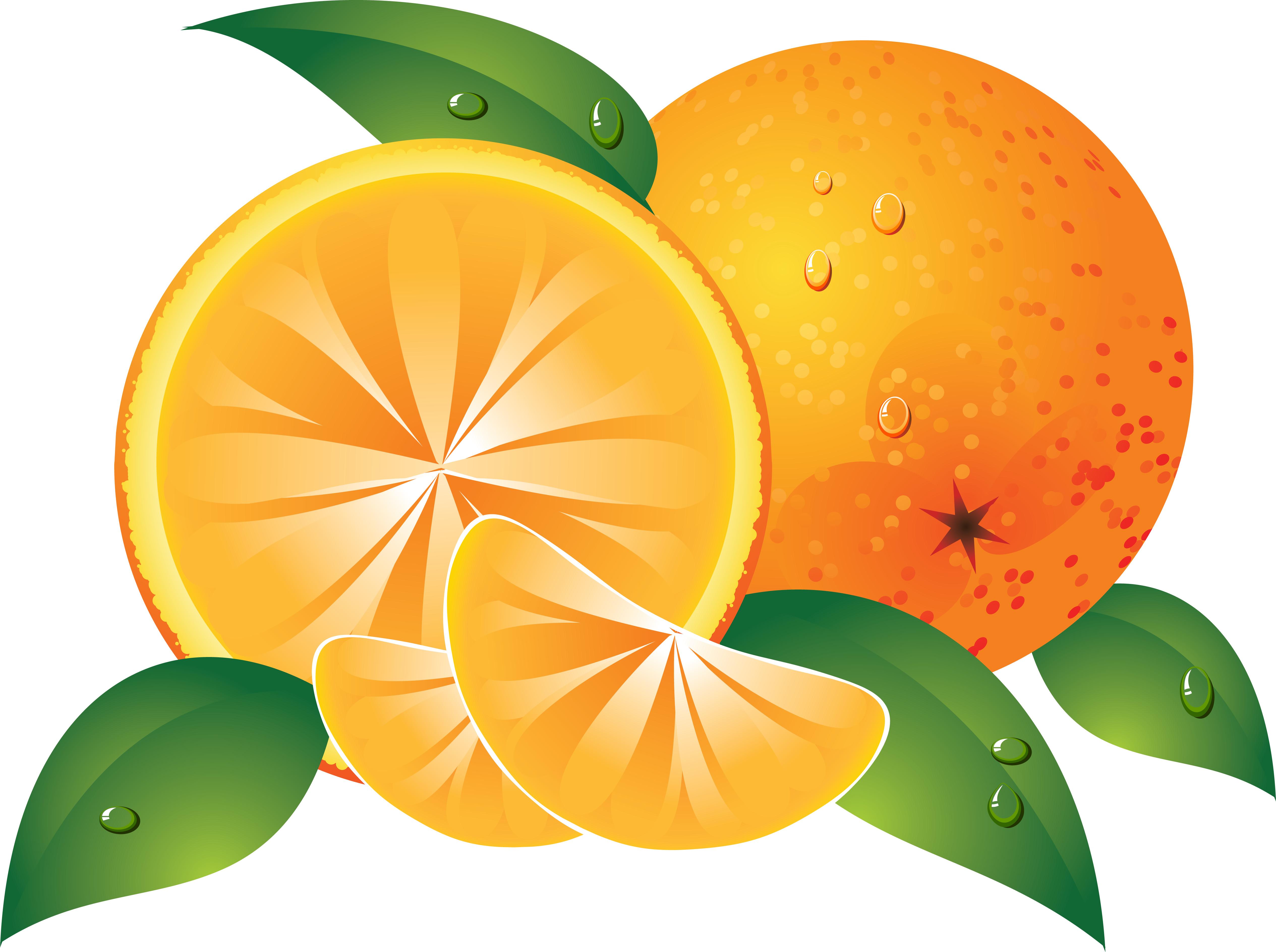Oranges clip art.