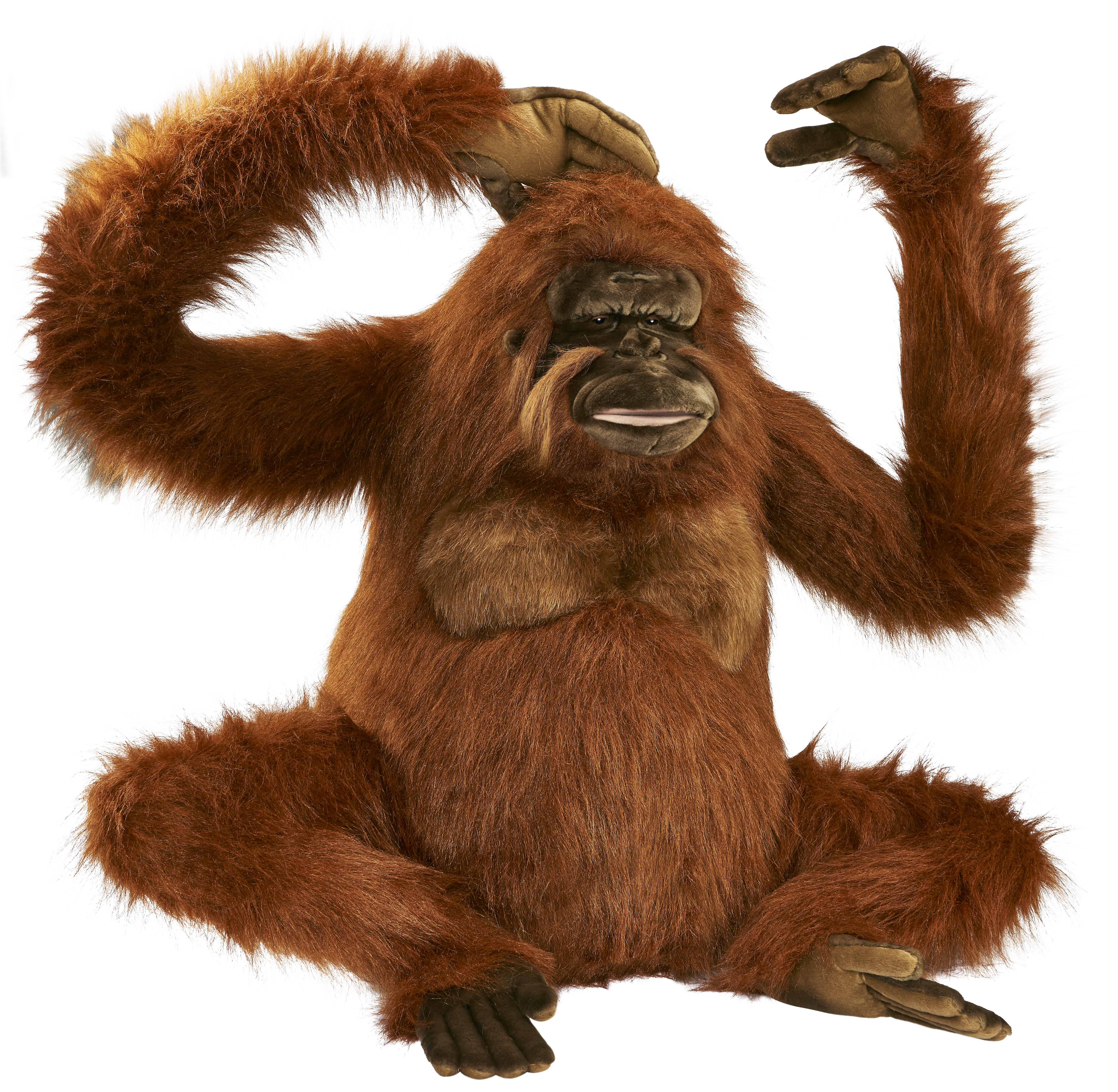 Orangutan PNG images free download.