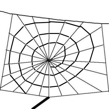 Construction of a spider orb web.