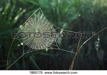 Stock Image of Orb web covered with dew, New Mexico, USA 1865175.