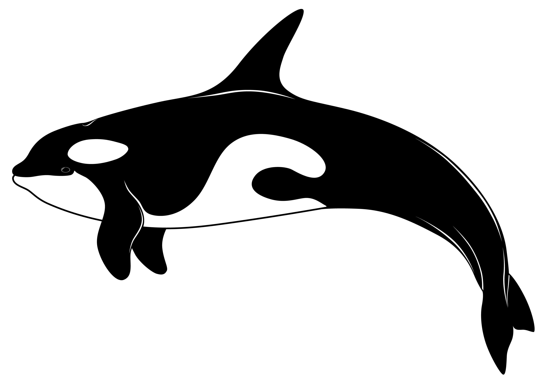 Orca clip art 3.