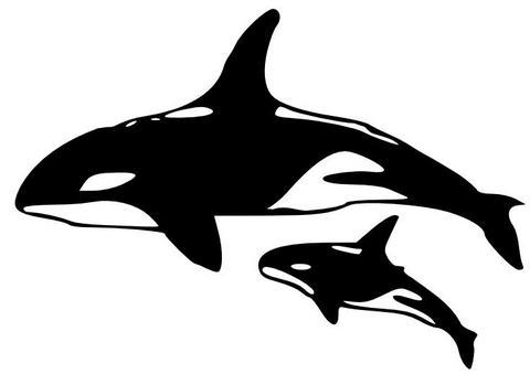 0 orca clipart.