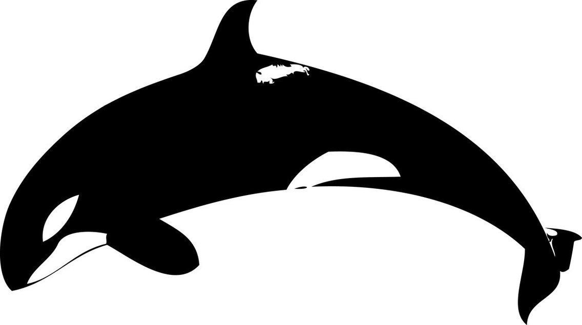 Orca Clipart Black And White.