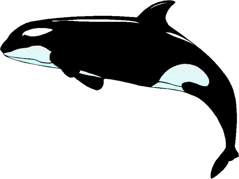 Orca clipart #16