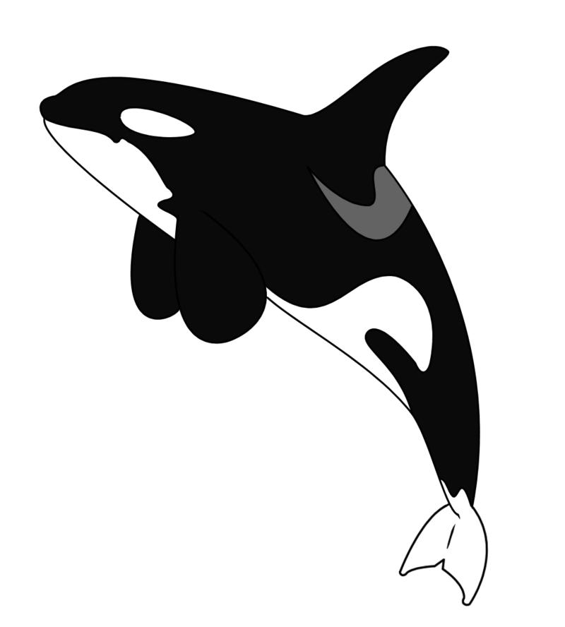Whale Cartoon clipart.