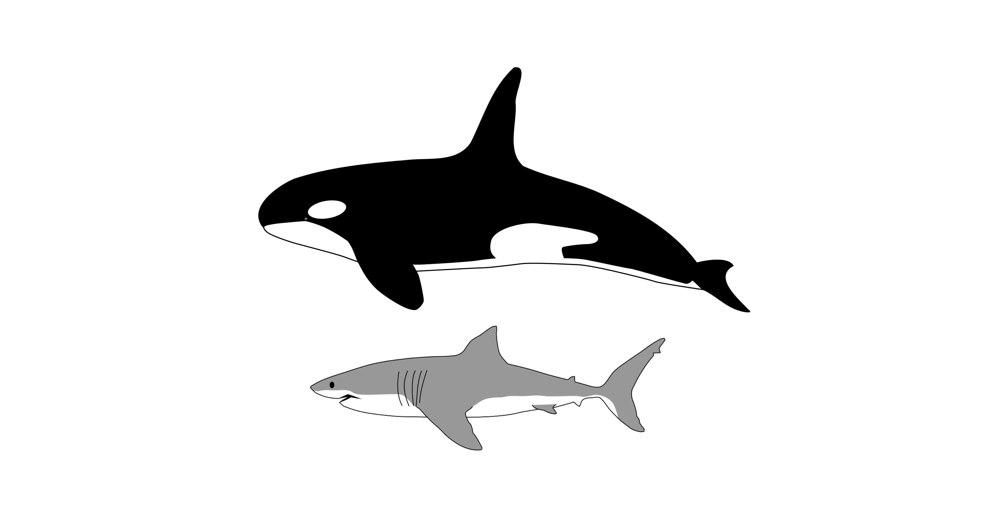 File:Comparison of size of orca and great white shark.png.