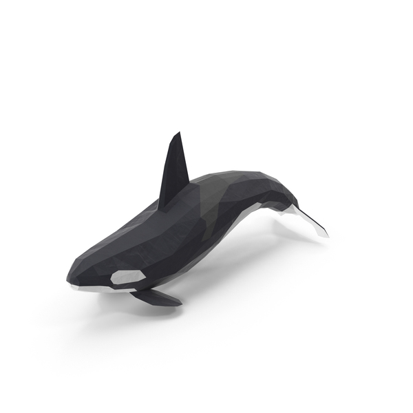Low Poly Orca Whale PNG Images & PSDs for Download.