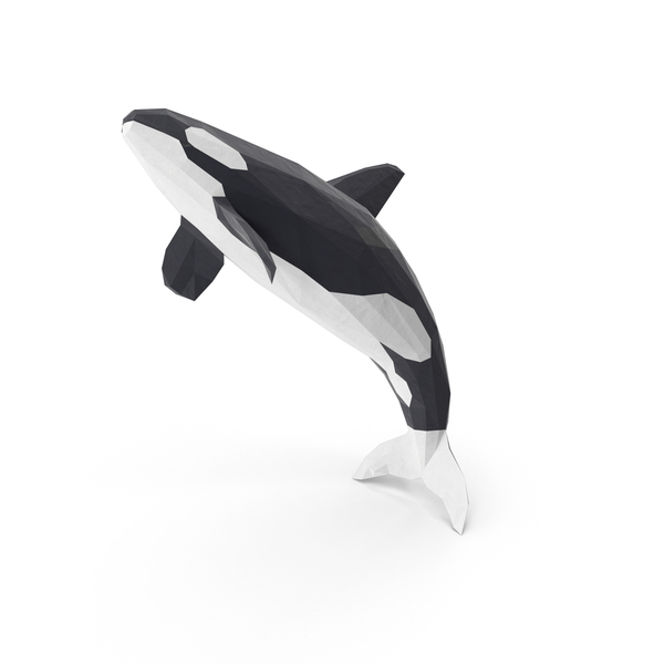 Orca Whale PNG Images & PSDs for Download.