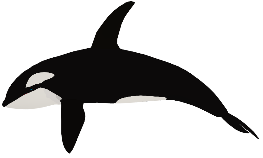 Orca Png (101+ images in Collection) Page 2.