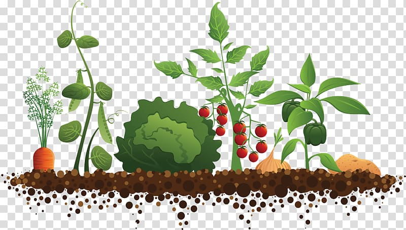 Multicolored vegetable plant , Community gardening Roof.
