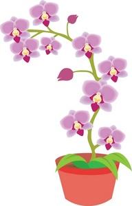 Orchid Clip Art.