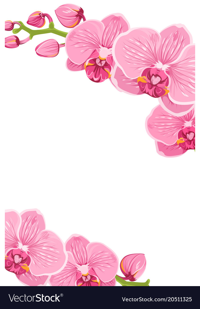 Pink orchid flowers border frame template card vector image.