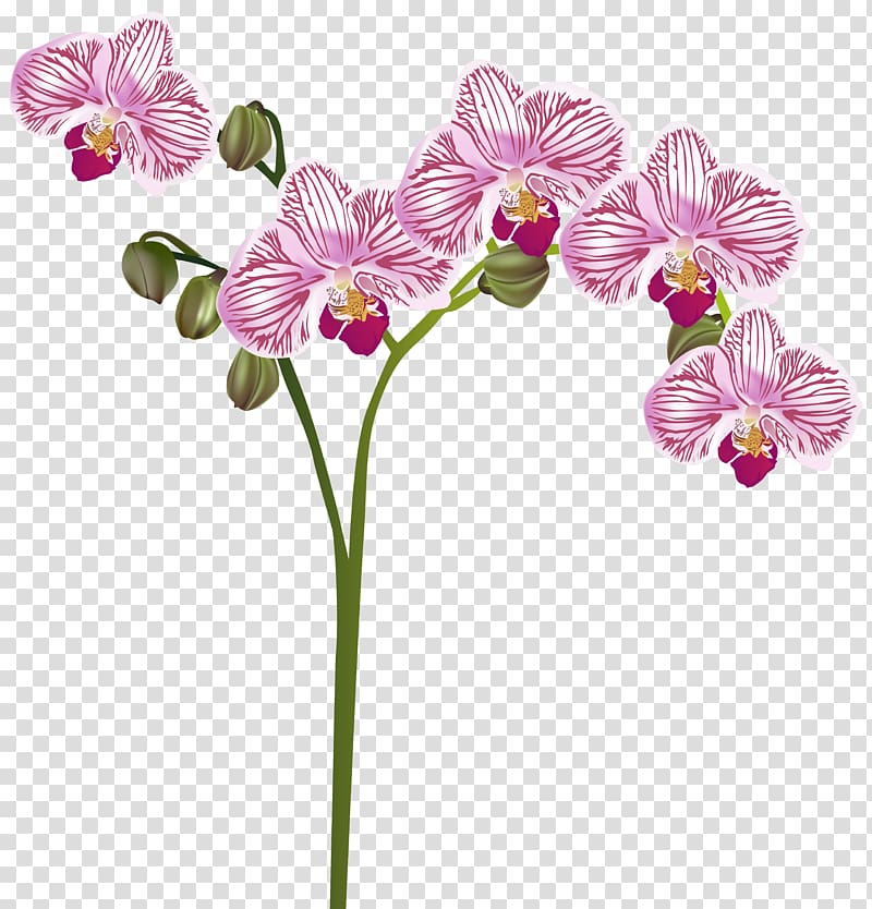 Purple flowers illustration, Orchids Flower , Orchid.