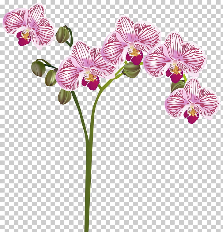 Orchids Flower , orchid PNG clipart.
