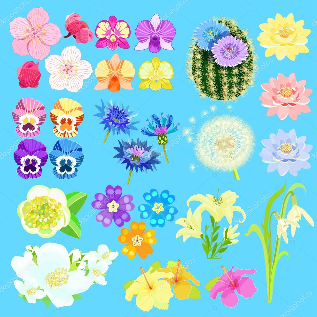 Set of lotus flowers, japanese cherry, orchid, cactus. vector il.