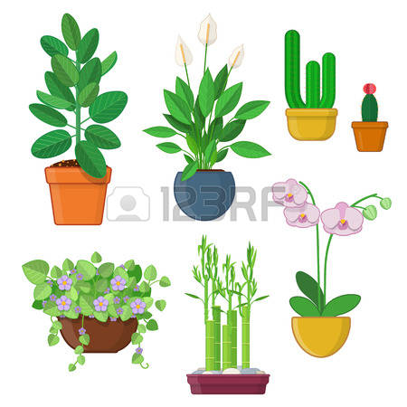 Orchid Cactus Images & Stock Pictures. Royalty Free Orchid Cactus.