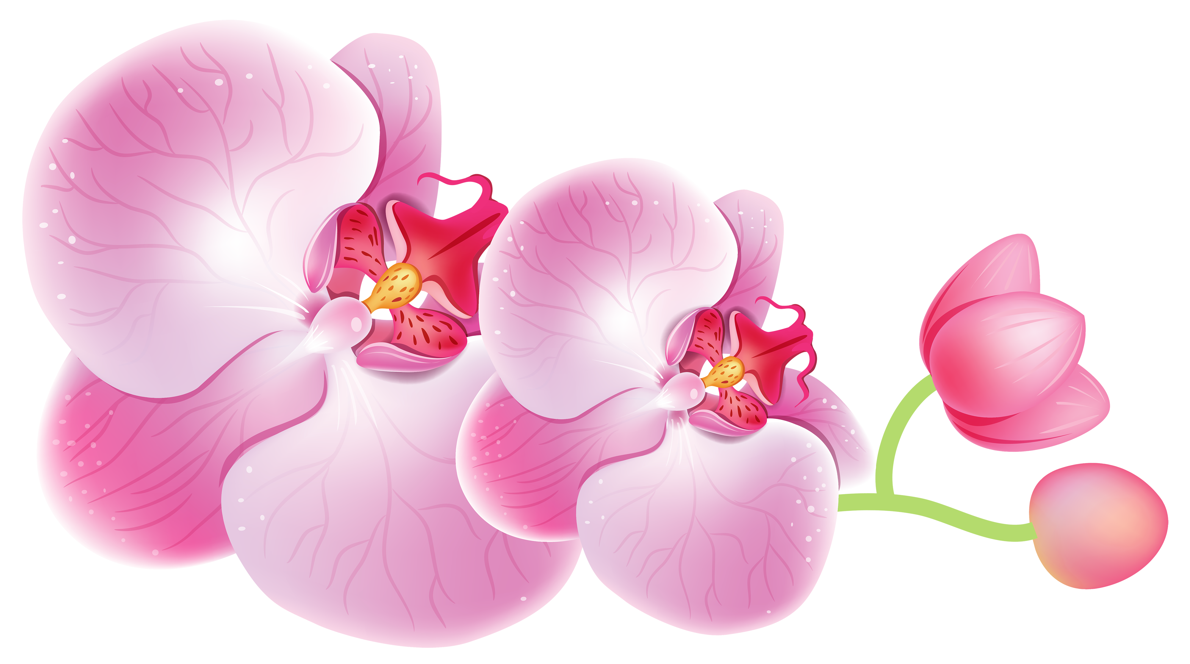 Orchid Flower Clipart.
