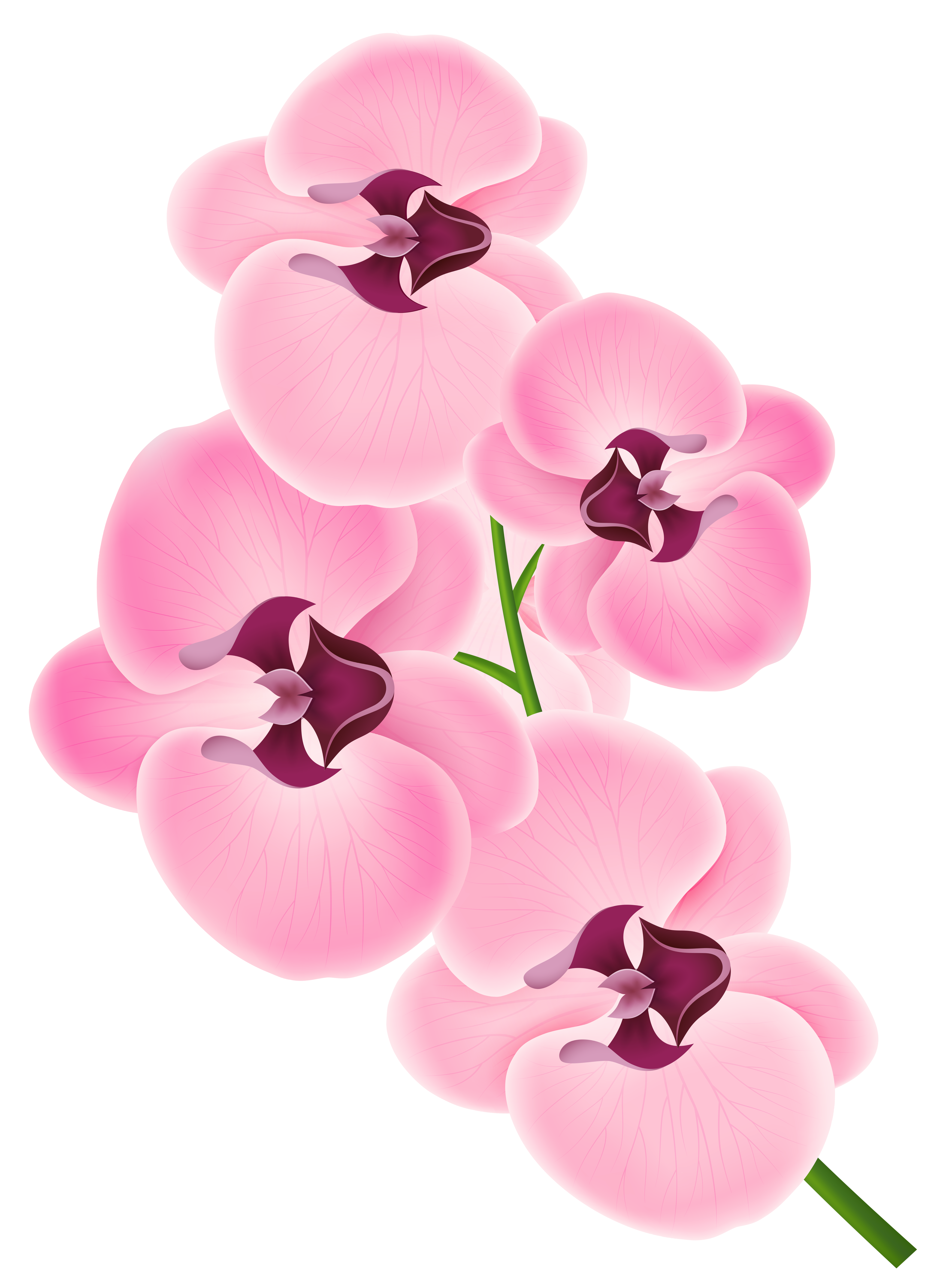 Pink Orchid PNG Clipart Image.