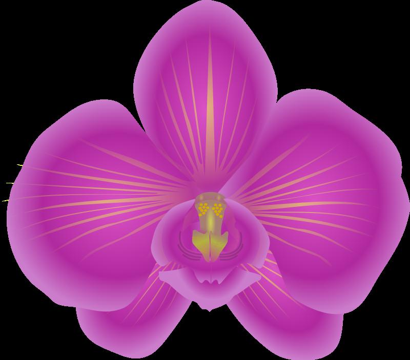 79+ Orchid Clip Art.