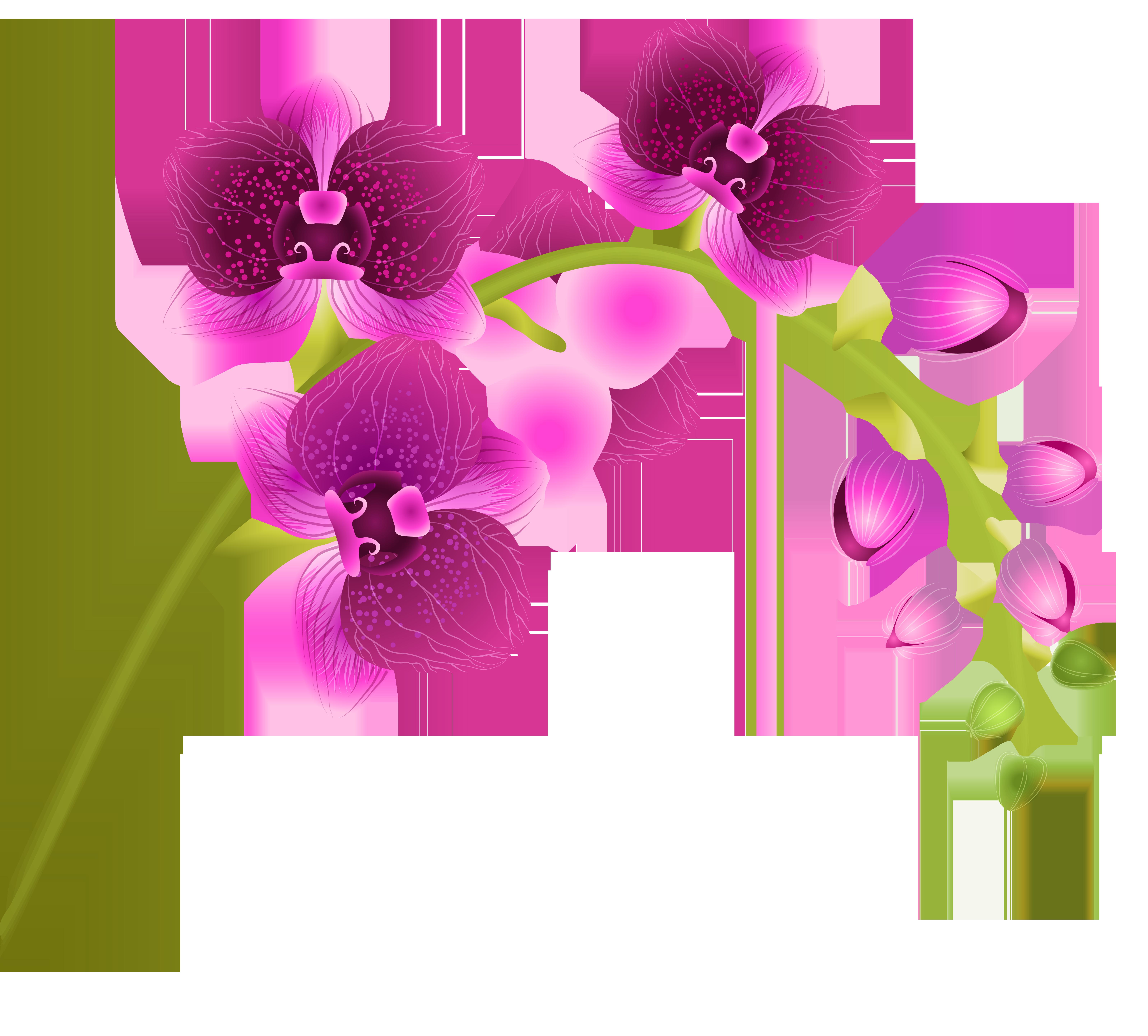 Orchid Flower Transparent PNG Clip Art Image.
