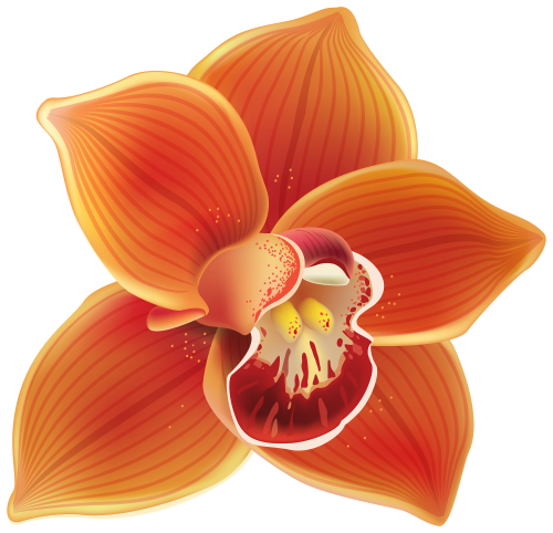 Orange Orchid PNG Clipart.