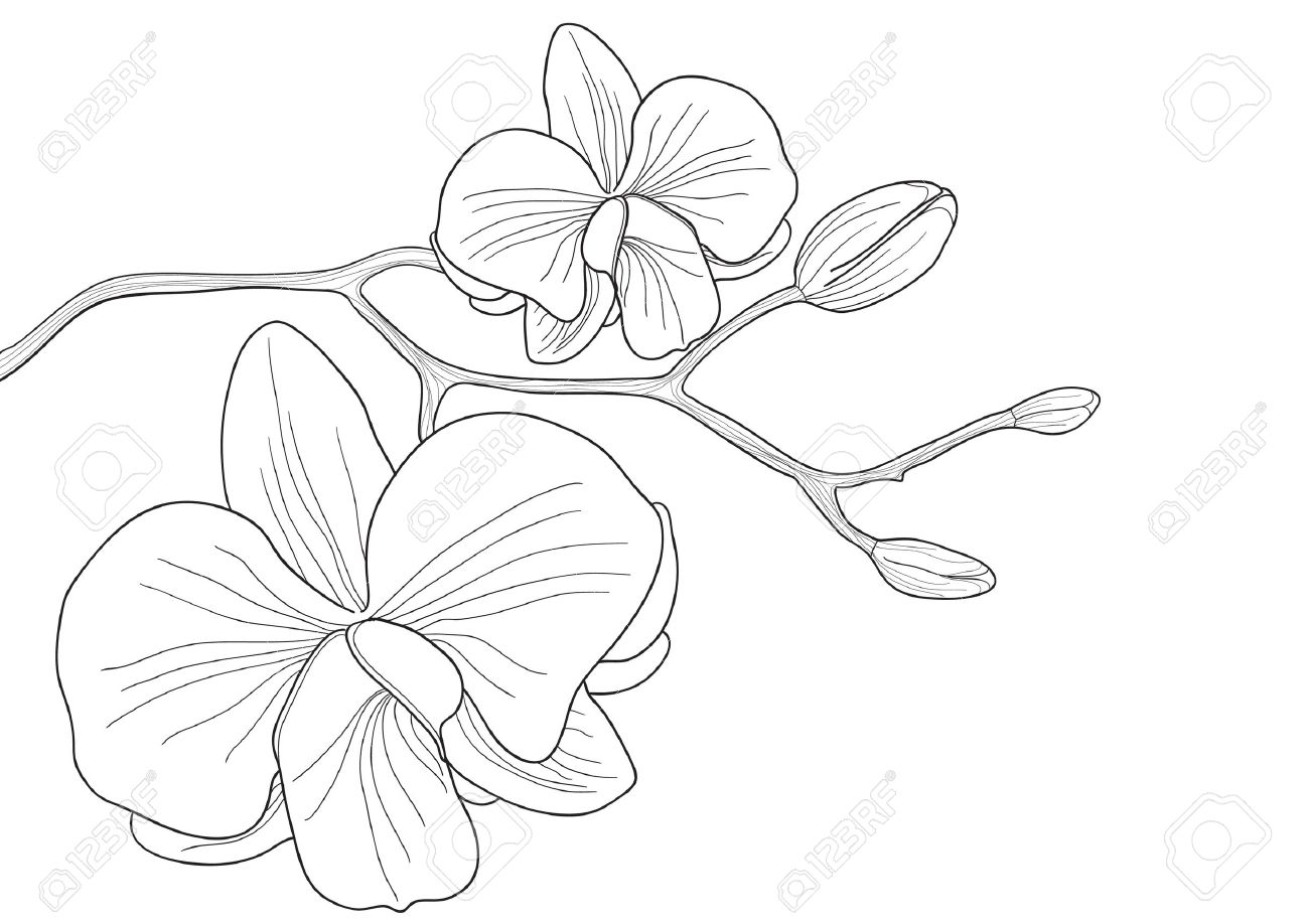 Orchids clipart black and white 4 » Clipart Station.