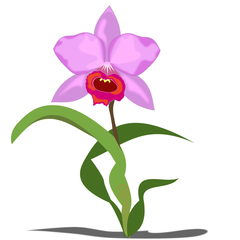 Free Orchid Flower Cliparts, Download Free Clip Art, Free.