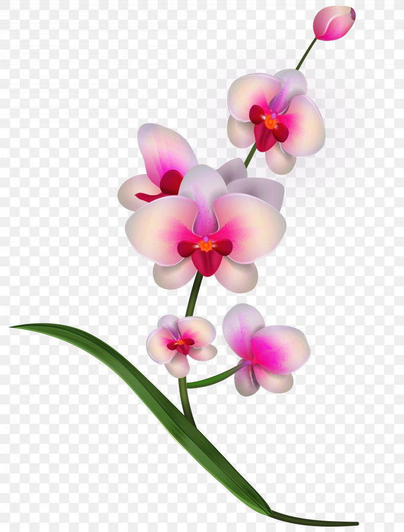 Lady\'s Slipper Orchids Flower Clip Art, PNG, 3097x4076px.
