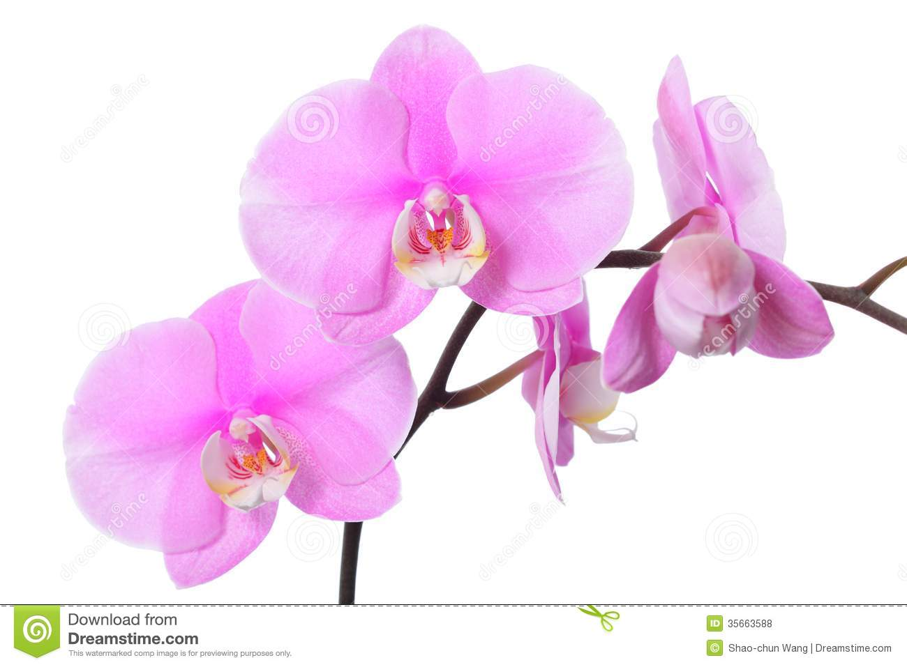 Nice Art digital exotic flower orchid sexy