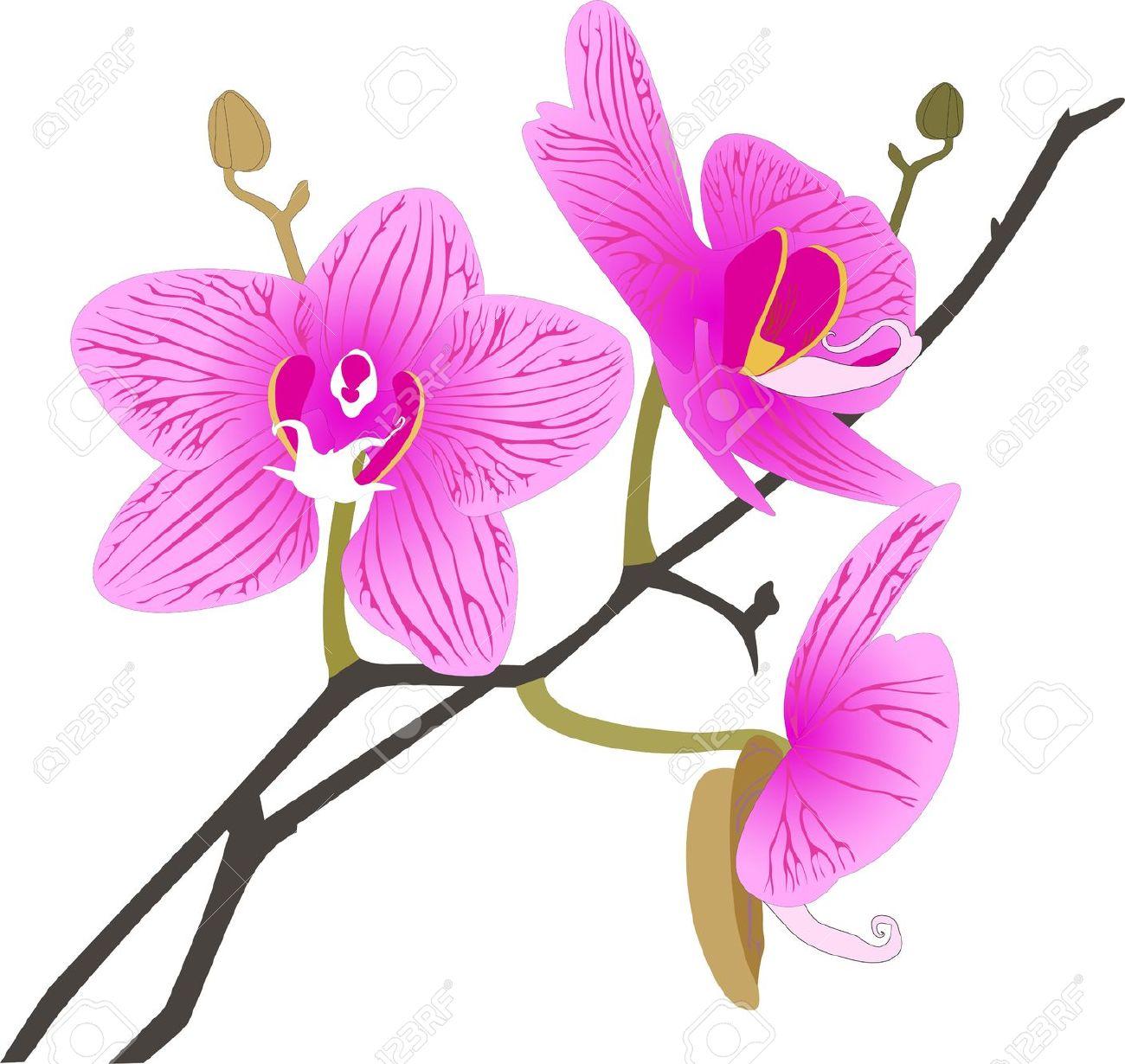 orchid flower clip art #10.
