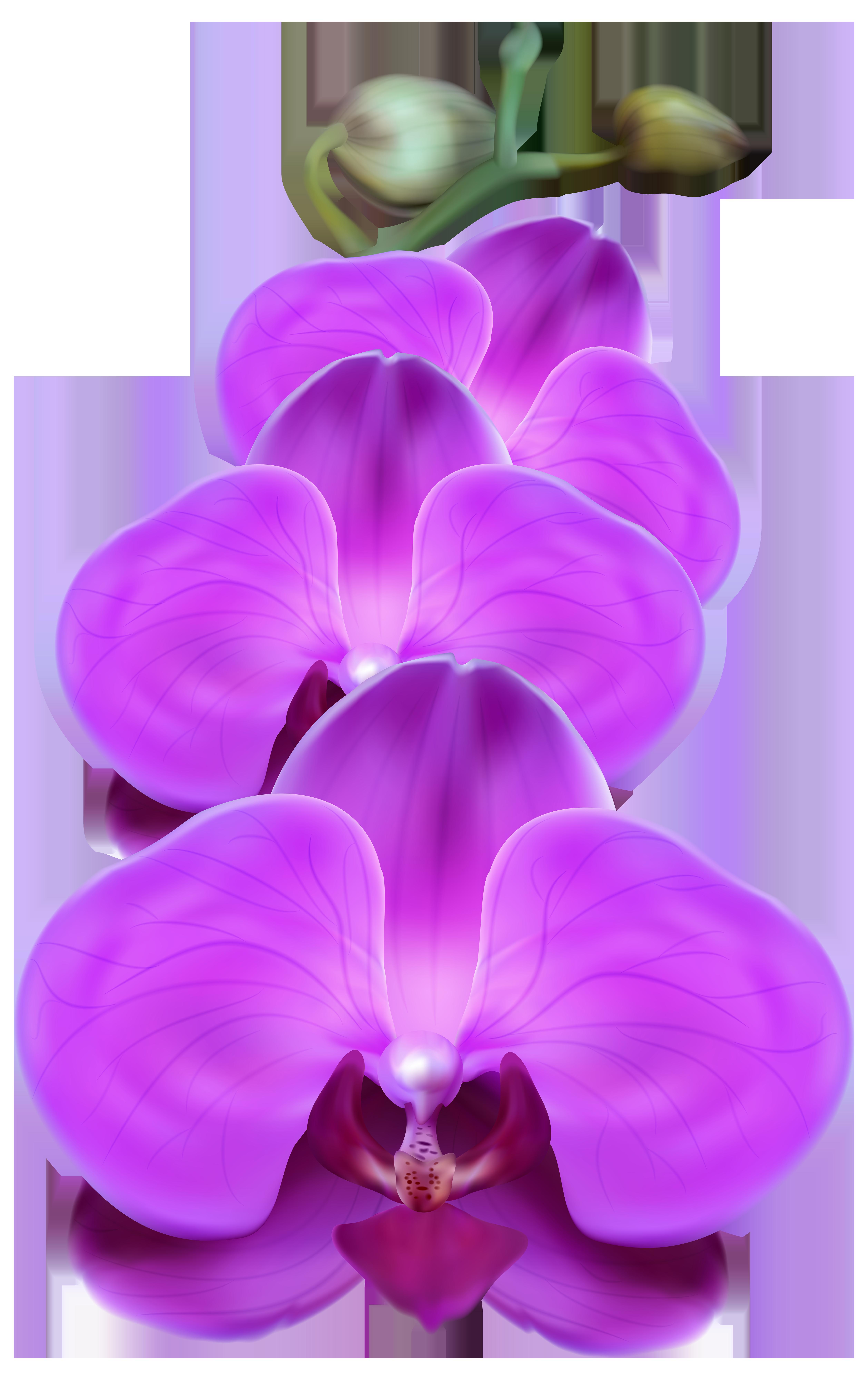 Purple Orchid PNG Transparent Clip Art Image.